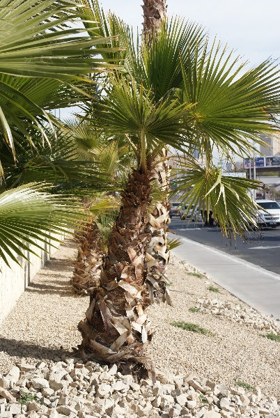 commercial landscaping, las vegas, nevada landscapes