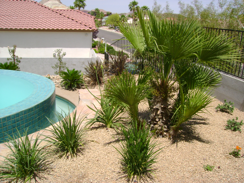 Desert landscaping and design