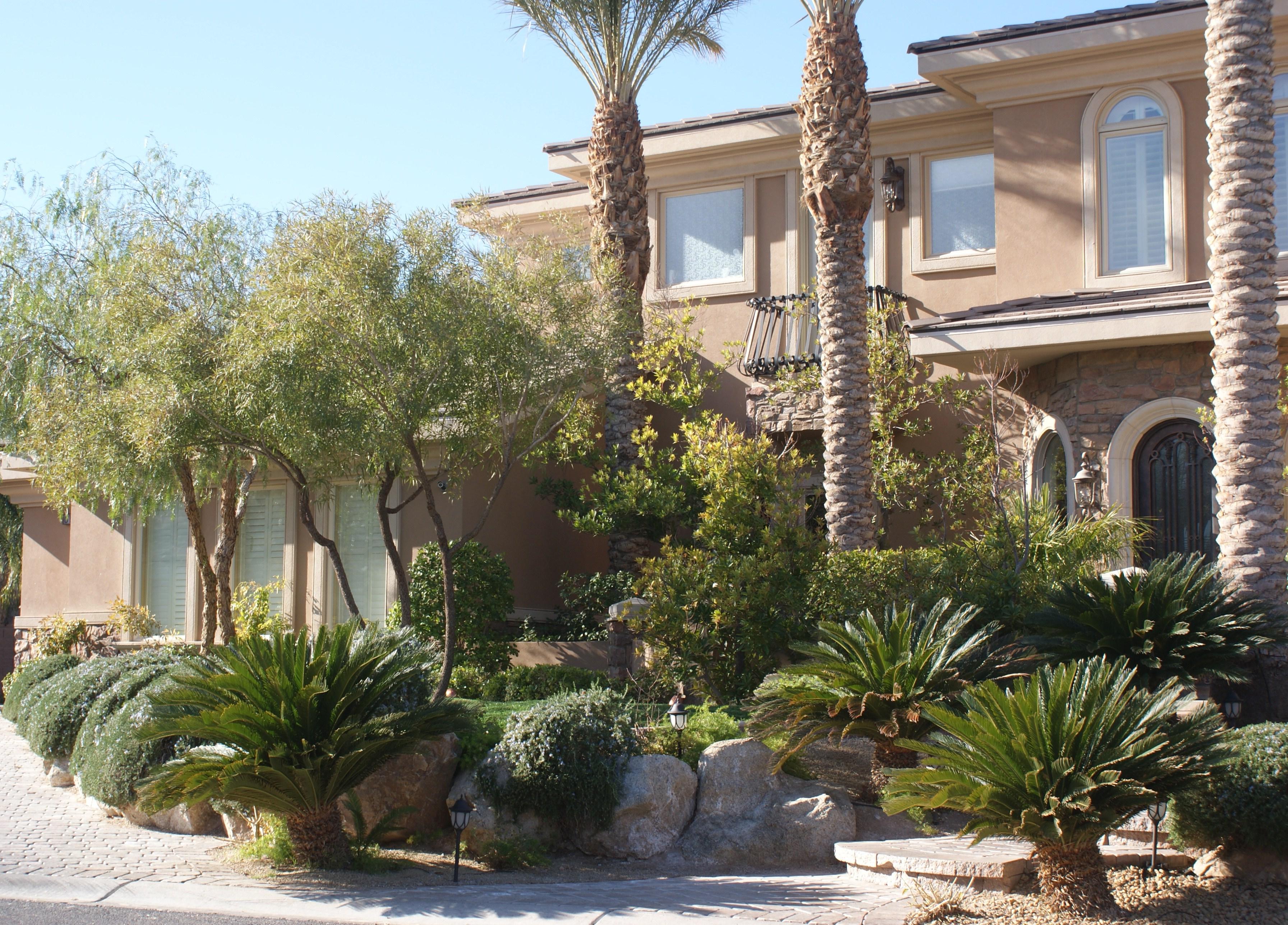 Las Vegas desert landscaping.
