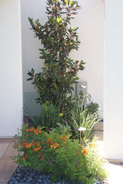 Plants in Las Vegas