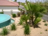 Desert landscaping and design