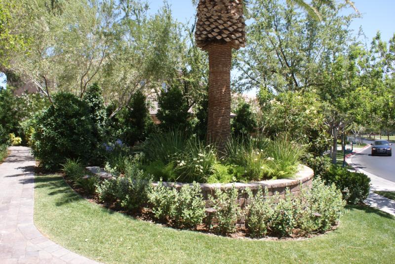 Las Vegas plants and palm trees