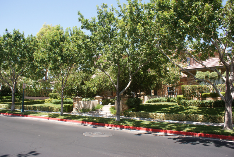Las Vegas landscaping and trees!