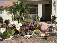 Southern Nevada Water landscape rebate